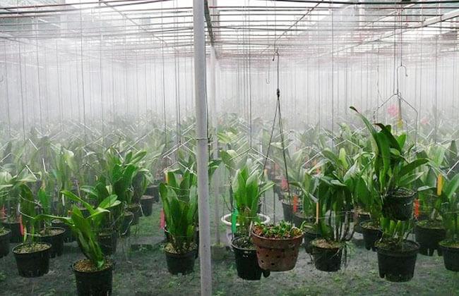 lắp máy phun sương quận Tân Bình